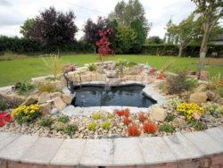 Pond & Water Gardening