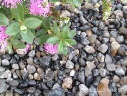 Drainage Gravel 20mm