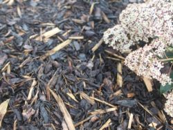 Coarse Bark Mulch